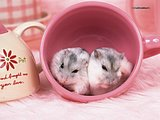 Cute Little Hamsters18 pics